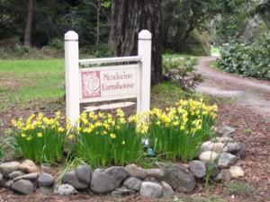 Spring daffodils at Mendocino Farmhouse