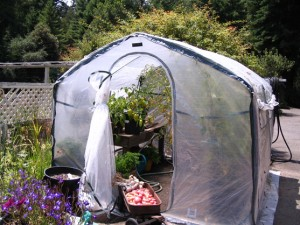 Mendocino Farmhouse greenhouse with veggies